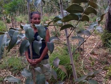 photo de la forêt heiwa plantée au Nicaragua avec un planteur